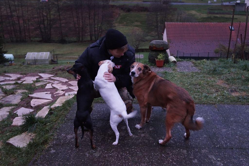 Liebe für alle Hunde