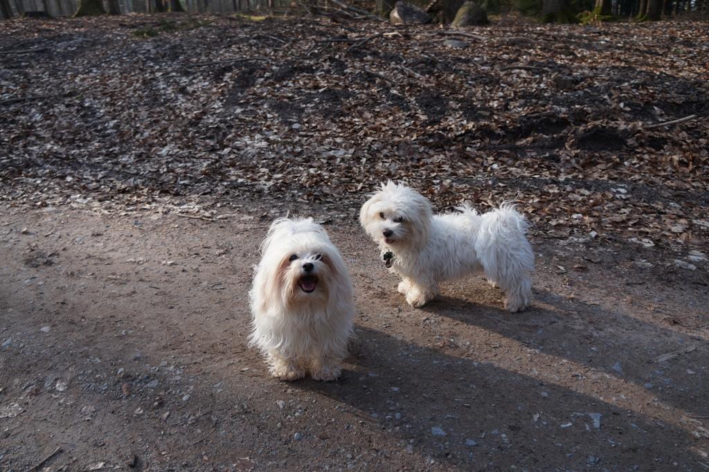 Hundegäste