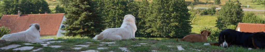 Die Hundebetreuung mit Herz, Sachverstand und Familienanschluss
