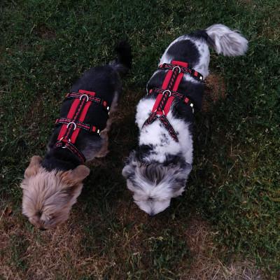 Bella & Toni mit Sicherheitsgeschirr